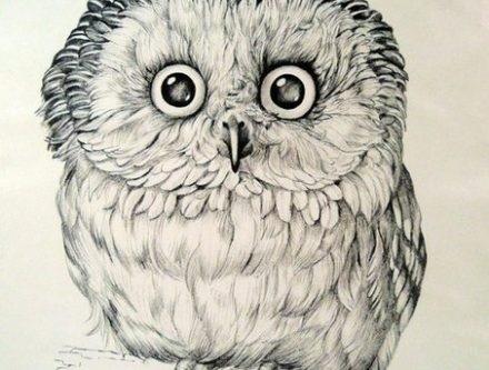 Картинки сова для срисовки (13)