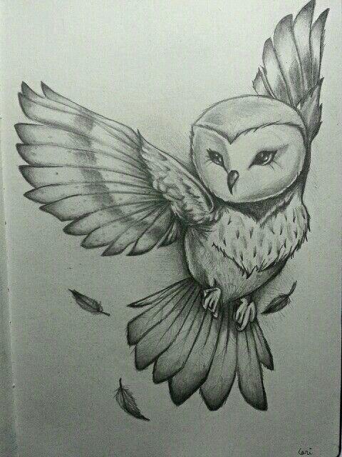 Картинки сова для срисовки (14)