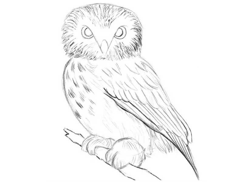 Картинки сова для срисовки (18)