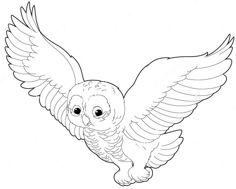 Картинки сова для срисовки (2)