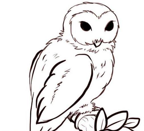 Картинки сова для срисовки (25)