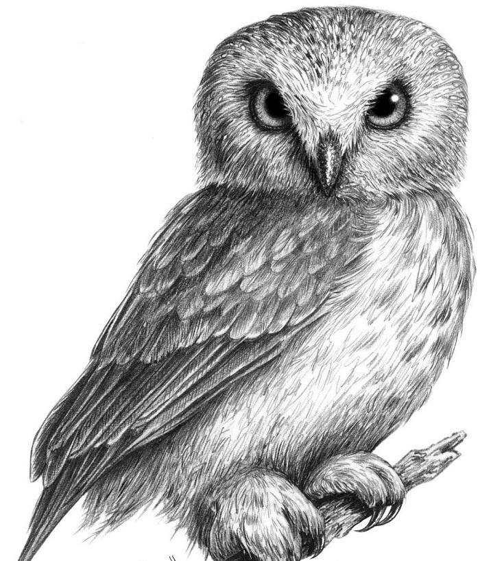 Картинки сова для срисовки (26)