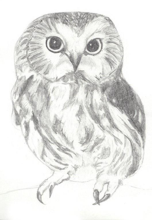 Картинки сова для срисовки (27)