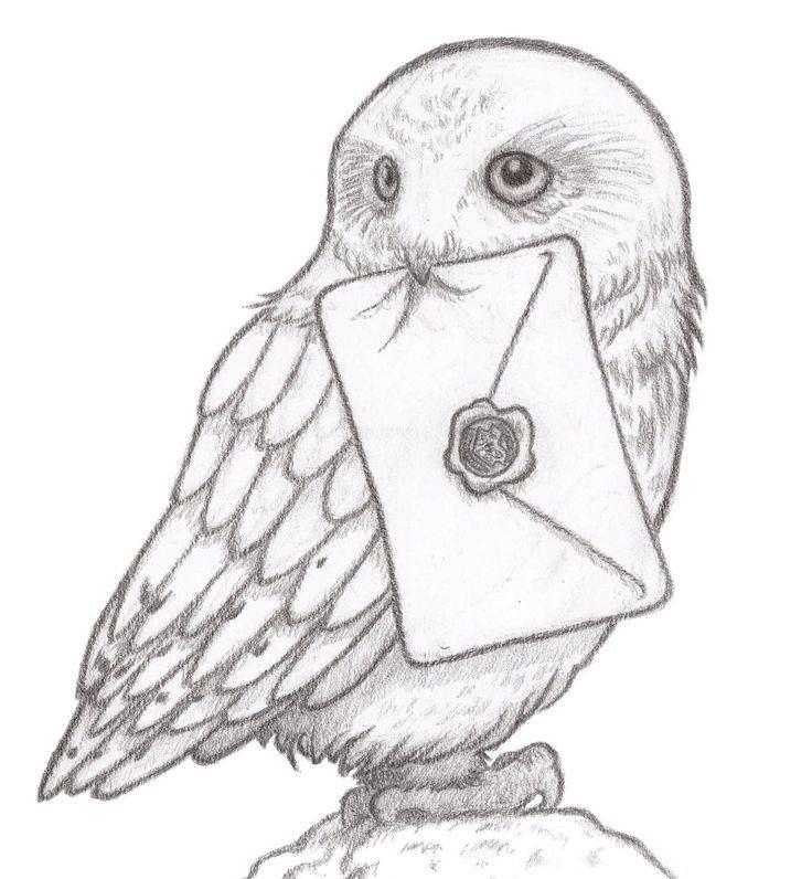 Картинки сова для срисовки (28)