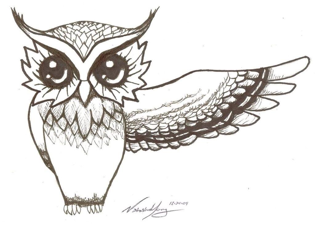 Картинки сова для срисовки (4)
