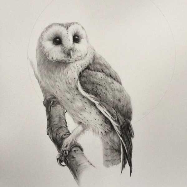 Картинки сова для срисовки (6)