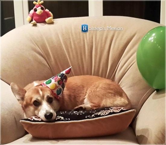 Картинки с днем рождения с корги (11)