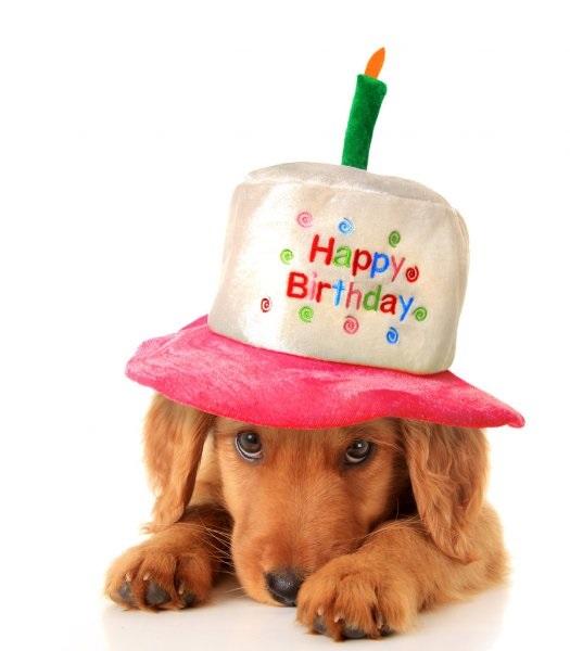 Картинки с днем рождения с корги (14)