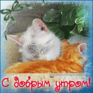 Котята доброе утро (2)