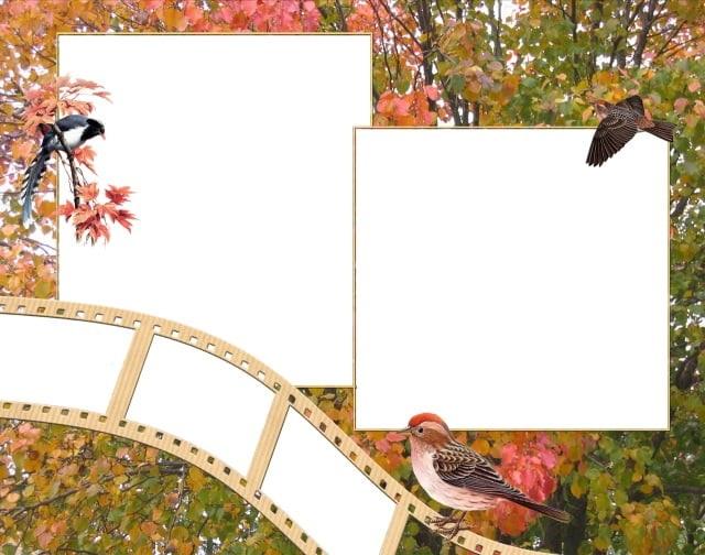 Красивые рамки для фотографий   подборка (17)