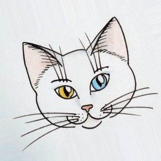 Лучшие картинки для срисовки кошки (12)