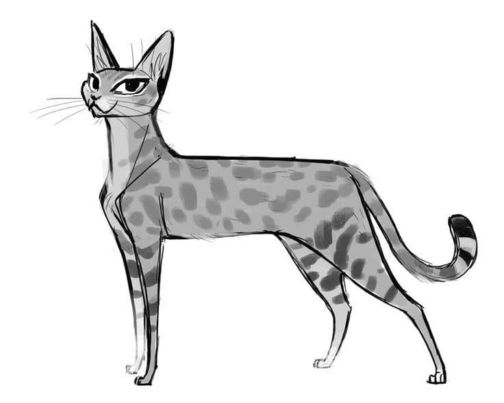 Лучшие картинки для срисовки кошки (2)