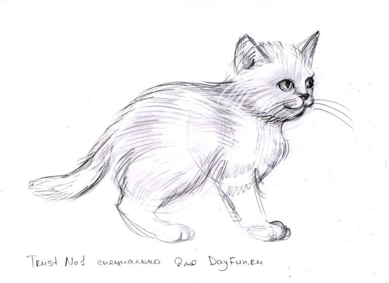 Лучшие картинки для срисовки кошки (3)