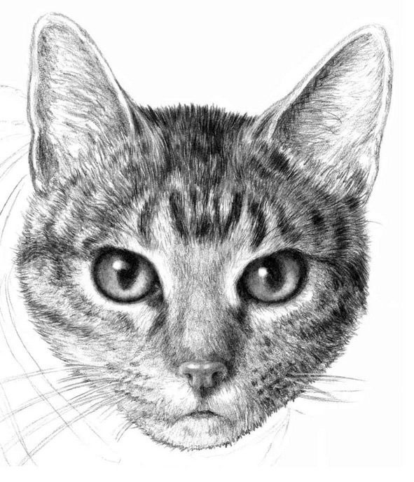 Лучшие картинки для срисовки кошки (8)