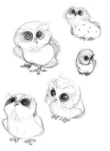 Лучшие картинки для срисовки сова (2)
