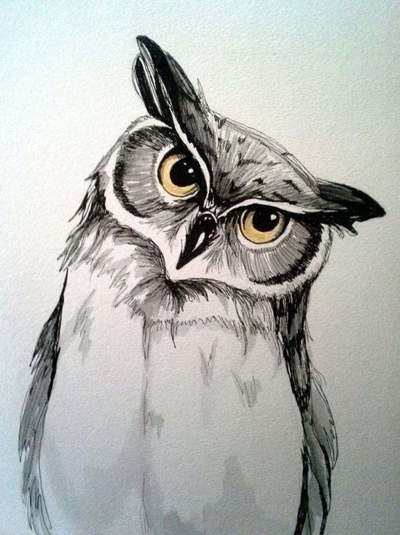 Лучшие картинки для срисовки сова (21)