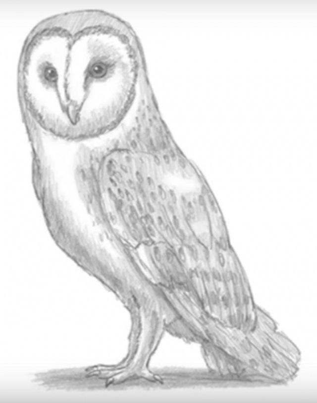 Лучшие картинки для срисовки сова (23)