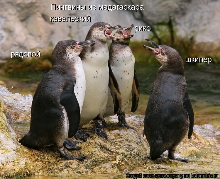 Подборка картинок пингвины мадагаскара хуманизация (4)