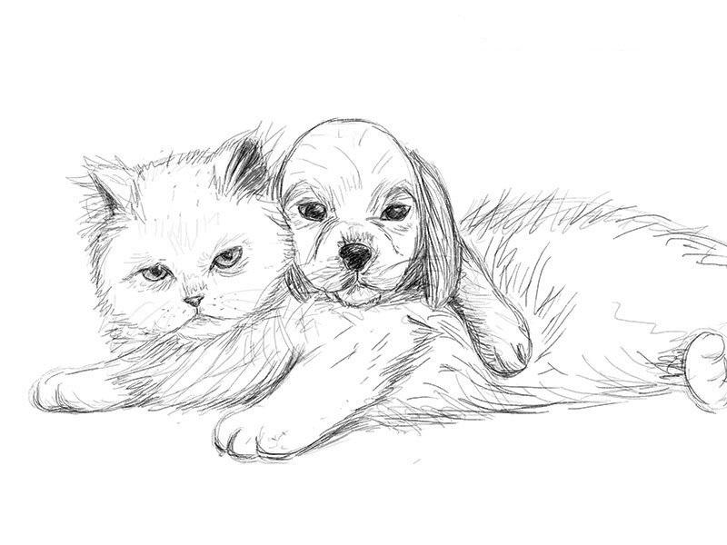 Рисунки карандашом милые животные - подборка (23)