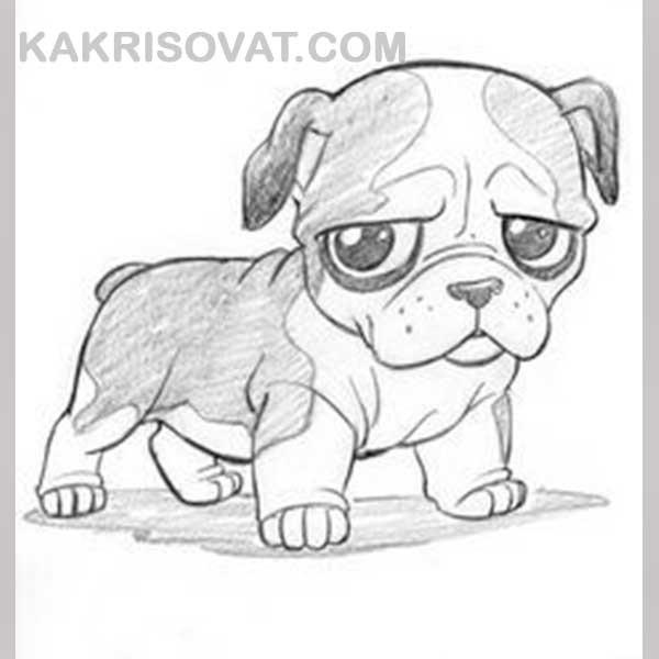 Рисунки карандашом милые животные - подборка (6)