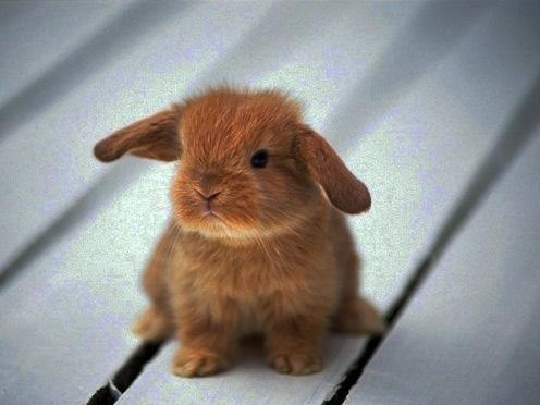 Рисунки кролики для детишек (11)
