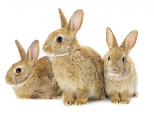 Рисунки кролики для детишек (12)