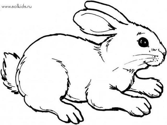 Рисунки кролики для детишек (13)