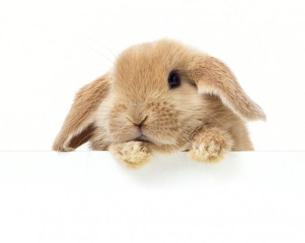 Рисунки кролики для детишек (18)