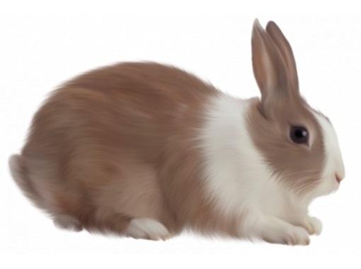 Рисунки кролики для детишек (19)