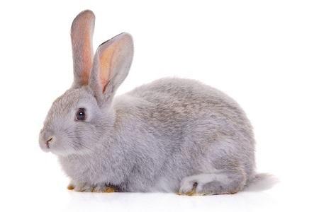 Рисунки кролики для детишек (20)