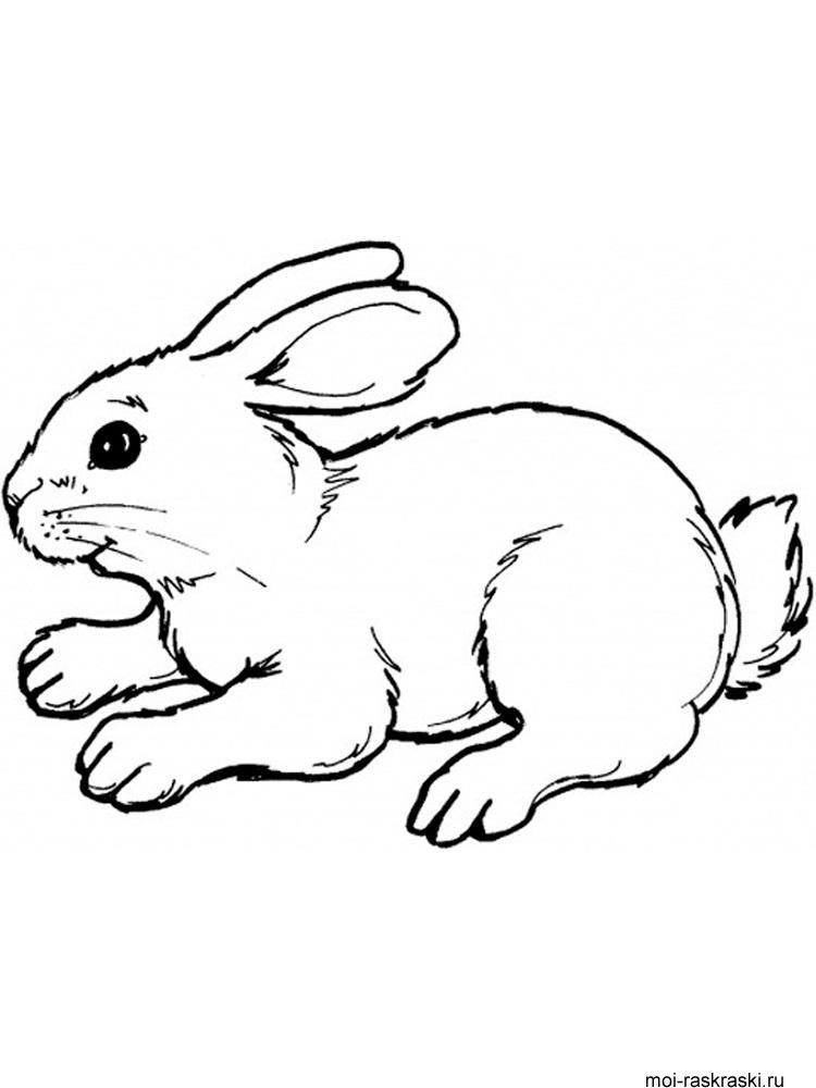 Рисунки кролики для детишек (5)