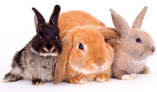 Рисунки кролики для детишек (7)