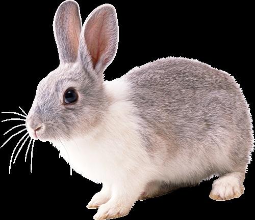 Рисунки кролики для детишек (8)