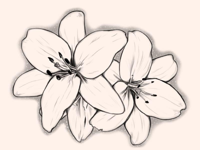 Рисунки цветов для срисовки цветные (10)