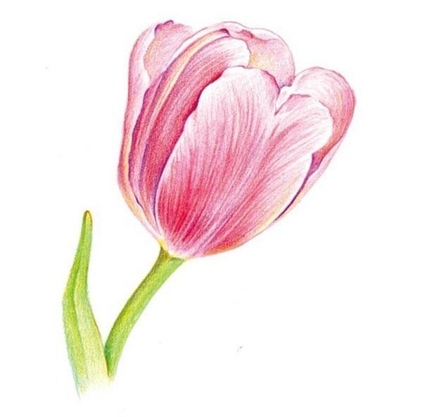 Рисунки цветов для срисовки цветные (11)