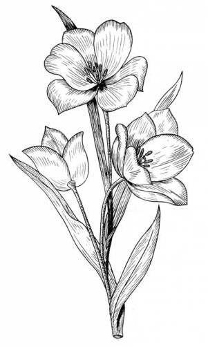 Рисунки цветов для срисовки цветные (13)