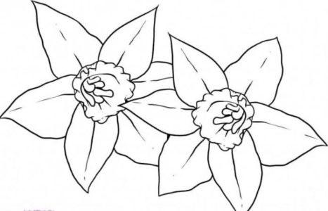 Рисунки цветов для срисовки цветные (15)