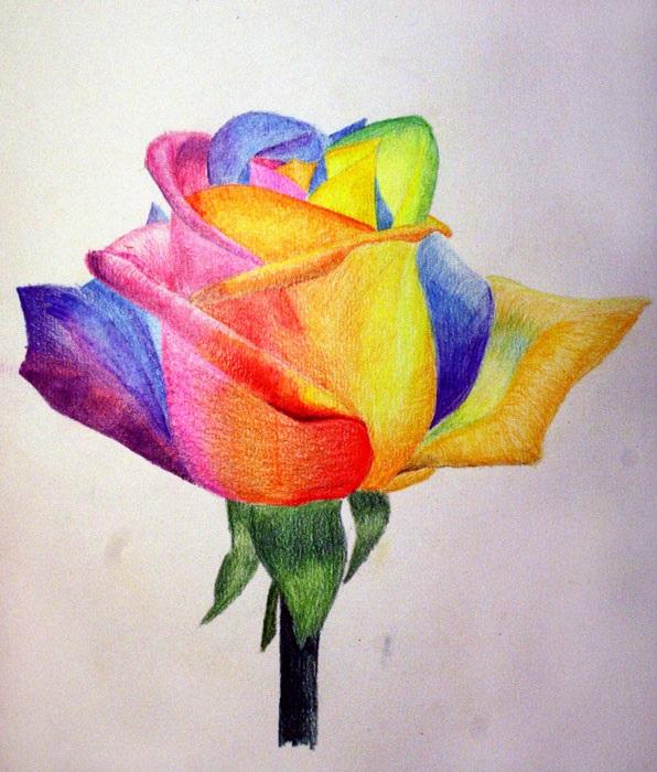 Рисунки цветов для срисовки цветные (18)