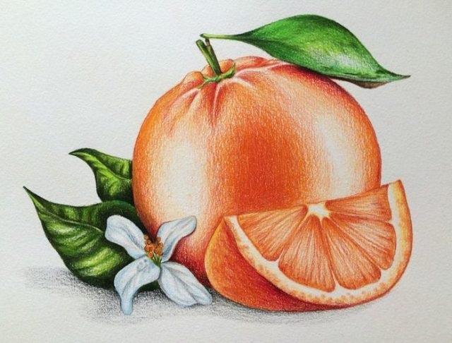 Рисунки цветов для срисовки цветные (2)