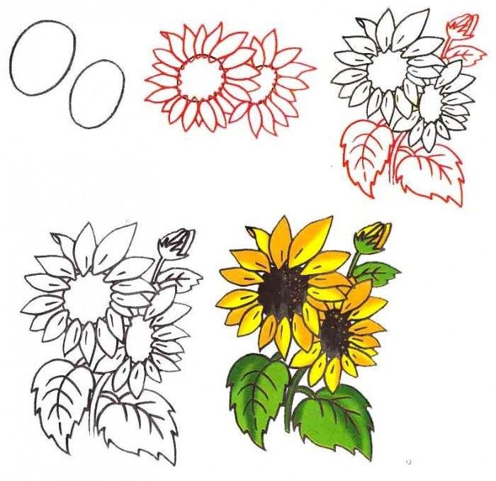 Рисунки цветов для срисовки цветные (20)