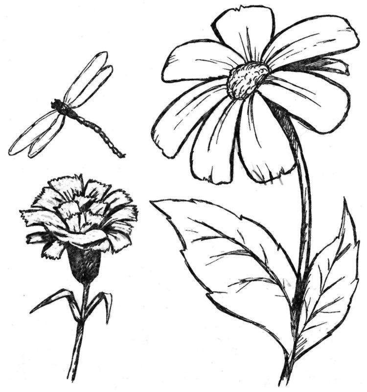 Рисунки цветов для срисовки цветные (23)