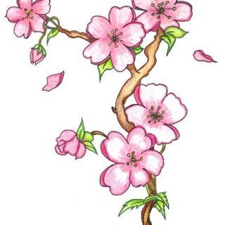 Рисунки цветов для срисовки цветные (5)