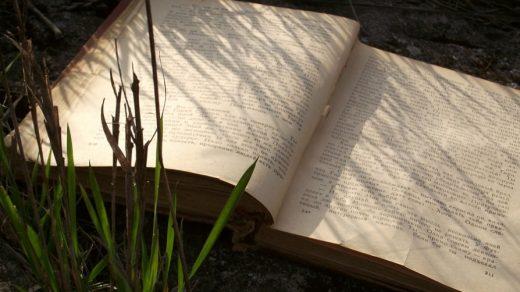 природа в литературе