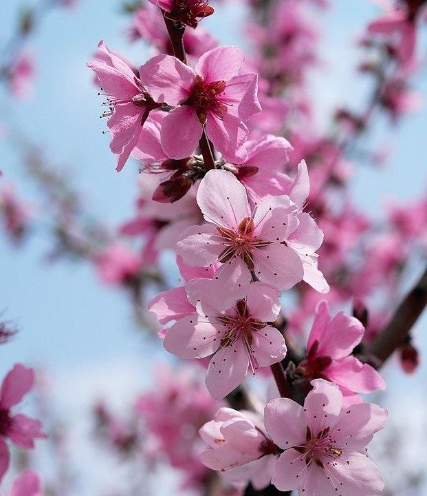 Весна Красивые фотографии (1)