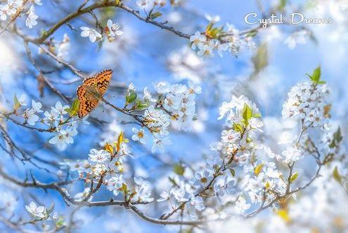 Весна Красивые фотографии (11)