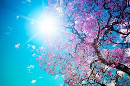 Весна Красивые фотографии (12)