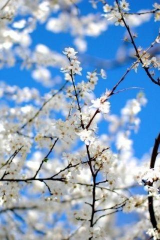 Весна Красивые фотографии (13)