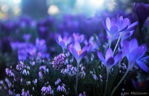 Весна Красивые фотографии (14)