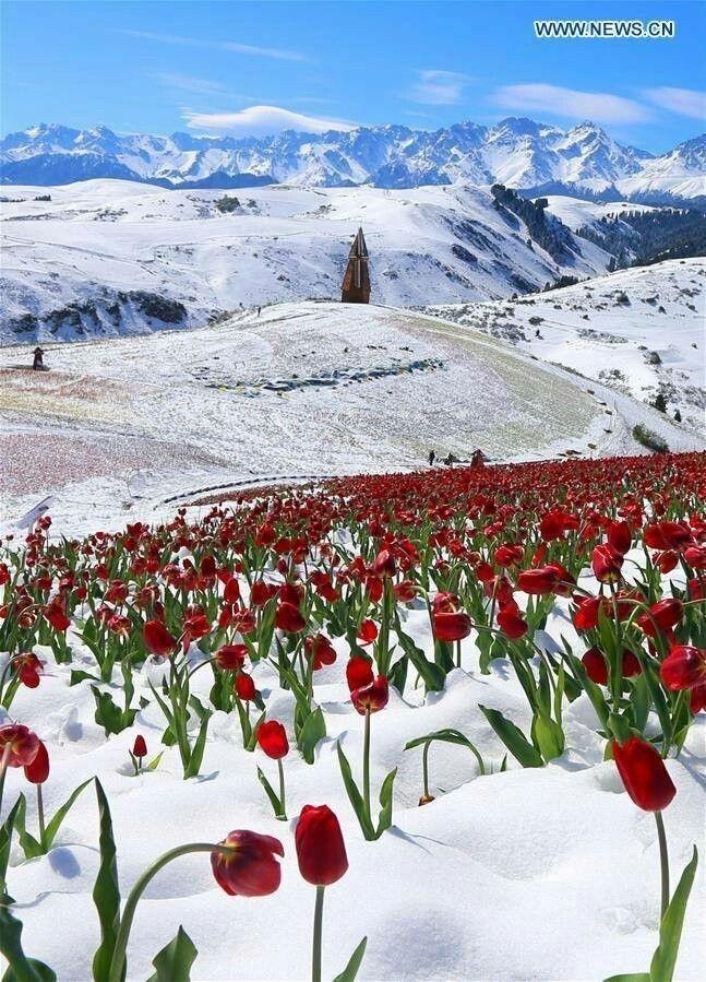 Весна Красивые фотографии (15)