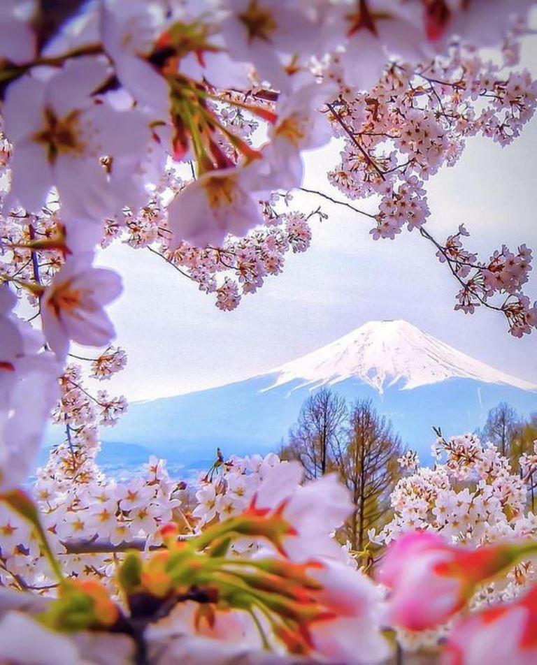 Весна Красивые фотографии (16)